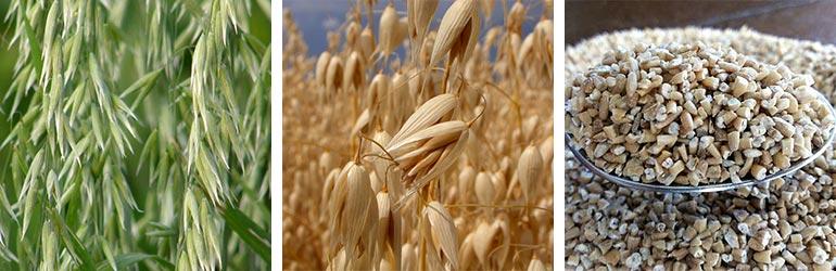 oat grains, best all-natural moisturizer ingredients