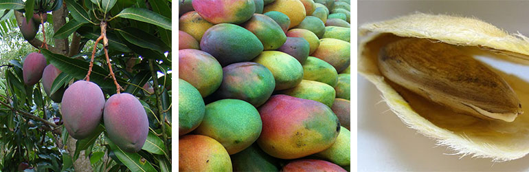 mango fruit and seed, best all-natural moisturizer ingredients
