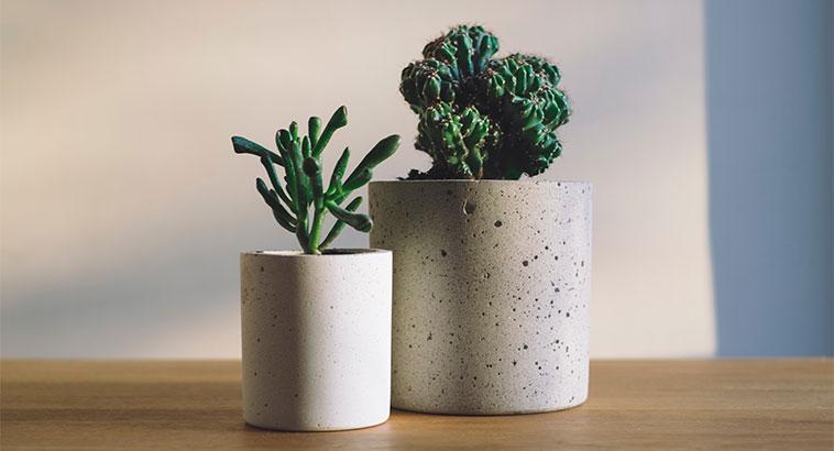 Best Green Ideas Lagom Lifestyle, Indoor Plants