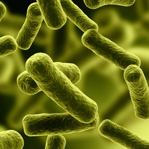 microbes, bacteria