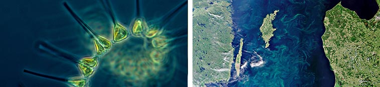 secrets best marine skincare microalgae