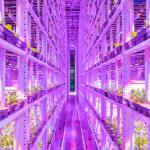 indoor vertical farming