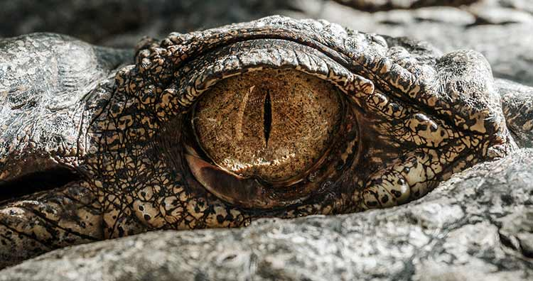 Big Brand Skincare Scary Secrets, Photo Of Crocodile Eye