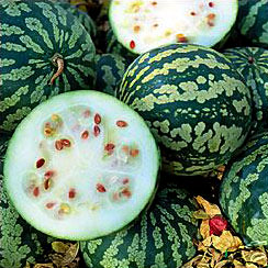 kalahari melon, best natural skin products