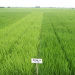 crop biodiversity field testing