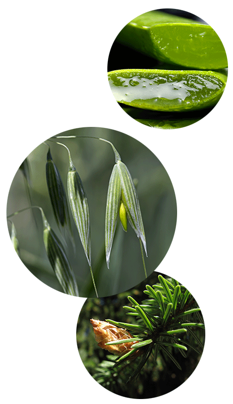 all-natural skincare ingredients, aloe vera, oats, spruce