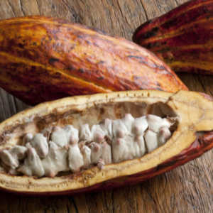 cocoa butter, an all-natural body moisturizer ingredient