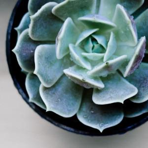 sustainability examples, sedum house plant